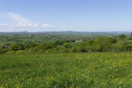 View over Hardington Moor, green grass dotted with yellow buttercups and blue skies